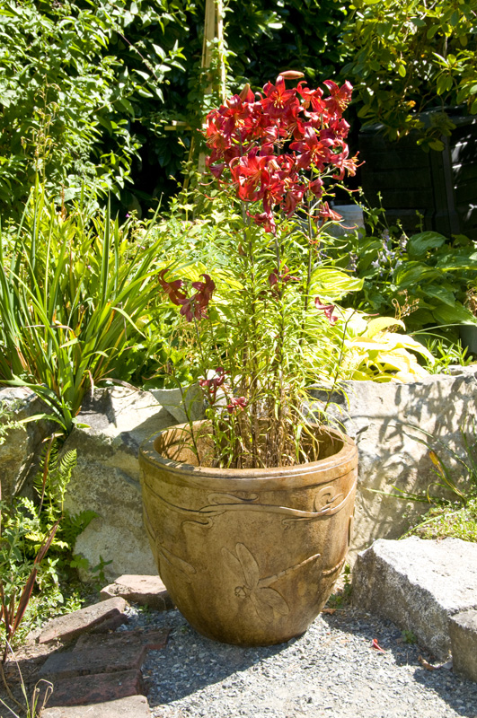 Dragonfly Pot acid stained concrete planter for garden or patio